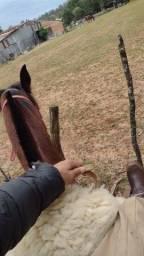 Título do anúncio: Cavalo colorado