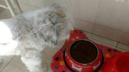 Tapete para cães/ Tapete Pet/Comedouro cães
