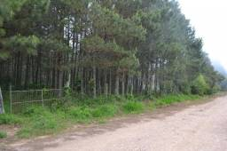 Area de terra em RIozinho