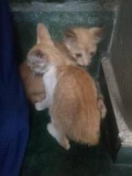 Doação de gatinhos bem novinho