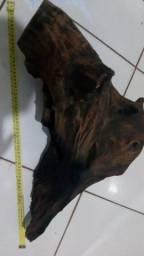 Vendo tronco aroeira Grande para aquário , tratado