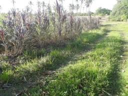 Fazenda com 170 hectares em PUREZA-RN poço com 60 mil litros horas