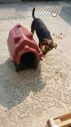 Casinha de cachorro plástico torro