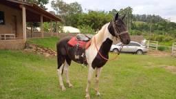 Cavalo manga larga (inteiro)