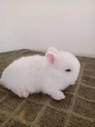 Título do anúncio: Filhotes de Mini coelhos a venda