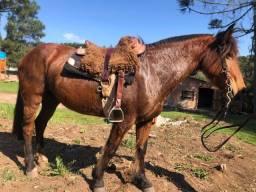 Título do anúncio: Cavalo crioulo com documentos