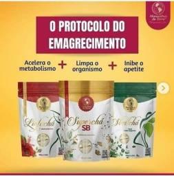 Protocolo Sb