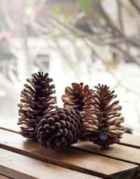 Título do anúncio: Pinha Natural para enfeite de Natal