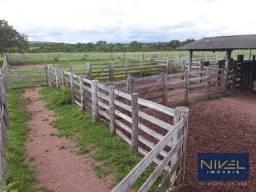 Fazenda à venda, 100 alqueires por R$ 6.000.000 - Zona Rural - Pium/TO