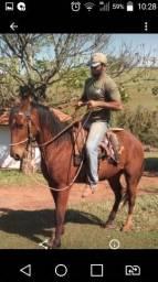 Cavalo com 5 muntadas