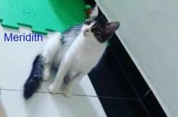 Doação de gato,2 fêmeas e 1 macho