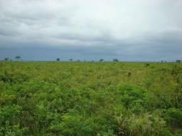 Arrendo Fazenda com 820 hectares, aberta, para soja e milho