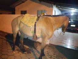 Cavalo de montaria 48 84289868