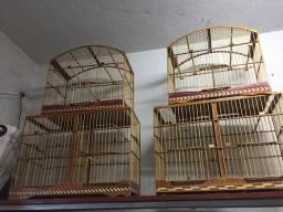 Voador e gaiola coleiro