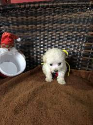 Lindos poodles micro toy