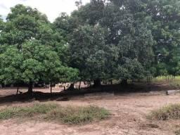 Fazenda ( São Miguel do Tocantins - TO)