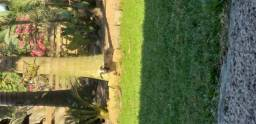 Ovelha e filhote