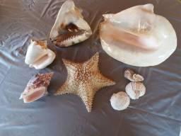 Coisas do mar