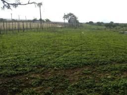 Fazenda com 111 hectares próximo a cajazeiras sentido são pedro whats. 981594441