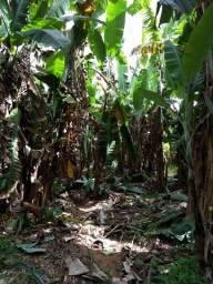Exelente sitio em Guaraciaba do norte
