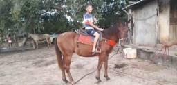 Vende-se esse cavalo quarto de milhar