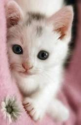 Procuro gatinho ou gatinha para adotar ?