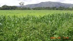 Fazenda 396 Alqueires em Formosa-GO