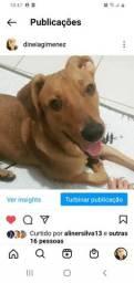 Título do anúncio: Doação de Dog lindo Vacinado