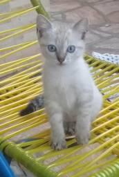 Estou doando duas gatas filhotes em Foz do Iguaçu