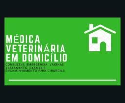 Médica Veterinária em domicílio