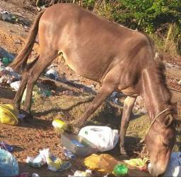 Doação de egua