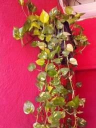 Título do anúncio: Plantas