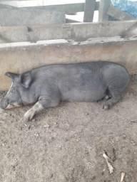 Vendo 4 porcas.OBS:Leia a descrição ?