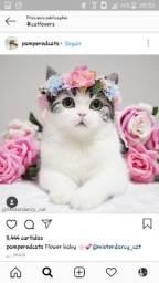 Adoto gatinho ou gatinha!