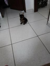 Cachorros zaq 988010549