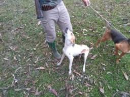 Cães de caça!