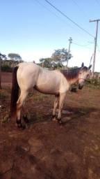 Cavalo disponível para venda