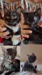 Gato pra adoção