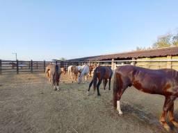 Título do anúncio: Equinos!!!! Lote. Oportunidade.