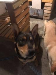 Título do anúncio: Doação de cachorro