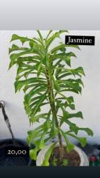 Título do anúncio: Plantas ?