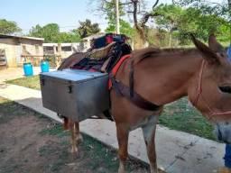 Animal Burro transporte bom pra tropa !!!