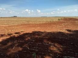 Ótima fazenda de 115 alq. terra roxa , região de Gardenia SP.