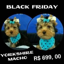 Yorkshire Macho na Black Friday do Puppy stop