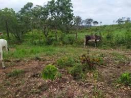 Fazenda 54 alqueires em Pindorama preço bom