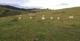 Fazenda em Guaratinga. 174 hectares