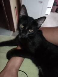 Doação uma gatinha dócil fêmea de 4 meses