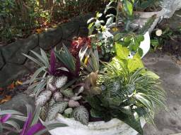 Flora jardim do Edem