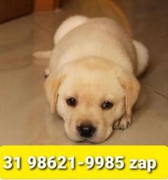 Título do anúncio: Canil em BH Filhotes Cães Labrador Golden Dálmata Boxer Akita Pastor Rottweiler