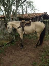 Cavalo 4 anos manso e bom todo